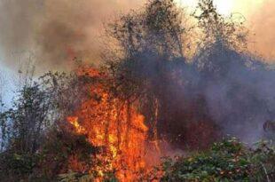 آتش سوزی جنگلی در چهار استان ترکیه