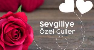 بخشنامه وزارت کشور ترکیه درباره روز ولنتاین و گل فروشیها