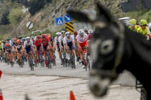 خر عکس تور دوچرخهسواری را ضایع کرد