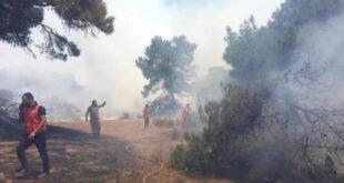 آتش سوزی منطقه جنگلی لارا در آنتالیا