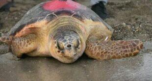 سفر حدود ۳۰۰ روزه یک لاکپشت از ترکیه به تونس
