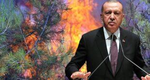 سفر اردوغان به مناطق آسیب دیده از آتش سوزی