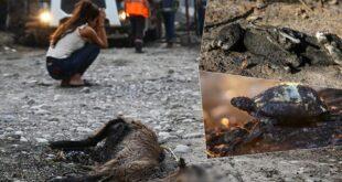 حیوانات سوخته در آتش سوزی جنگلهای ترکیه