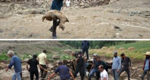 تلف شدن 500 راس دام در حَکّاری ترکیه